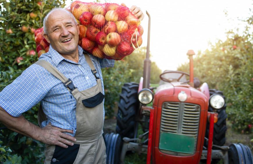 L'activité agricole